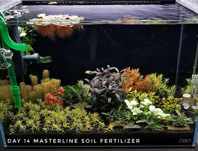 Masterline Soil Day 14 28.11.2020 Forum.jpg