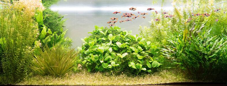 Aquarium 11.11.2020.jpg