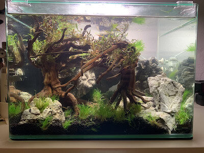 Aquarium.jpg.jpg