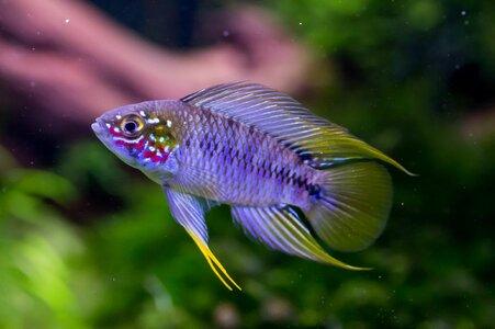 Aquarium (1 von 8)Bock.jpg