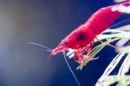 Aquarium (2 von 8) .jpg