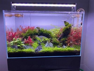 aquascape-Aquabelle.jpg