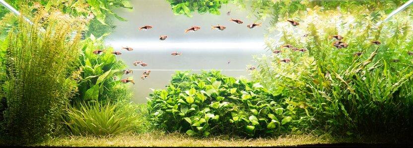 Aquarium 01.03.2021-1.jpg