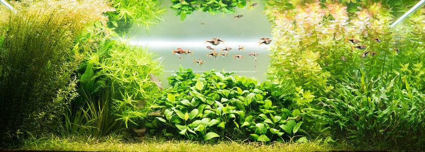 Aquarium 06.06.2021 1.jpg