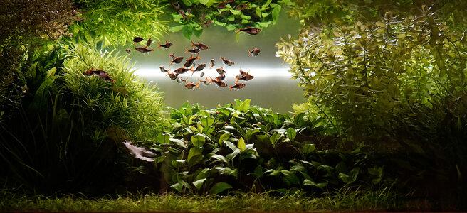 Aquarium 24.06.2021.jpg