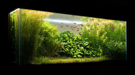 Aquarium 28.06.2021.jpg