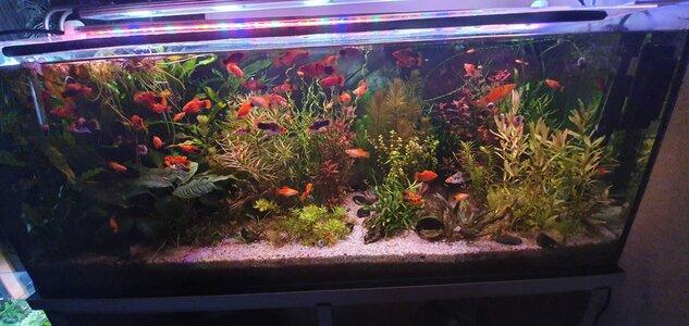Mein Aquarium.jpeg