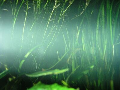 Schwebstoffe Schauaquarium.jpg