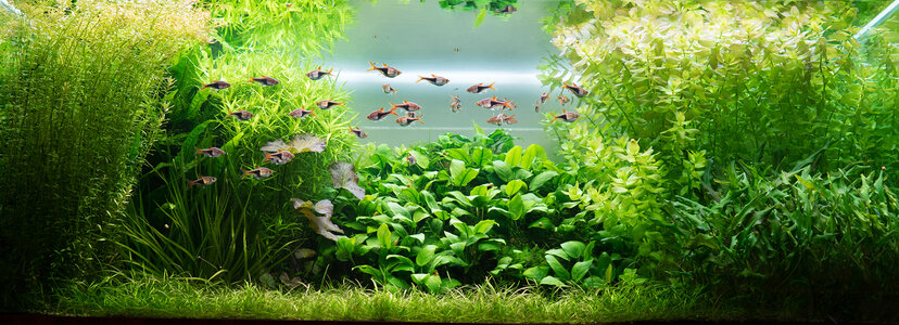 Aquarium 23.07.2021.jpg
