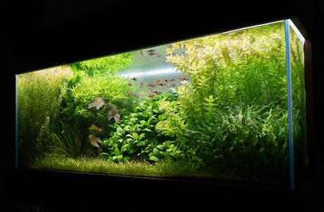 Aquarium 30.07.2021-1.jpg