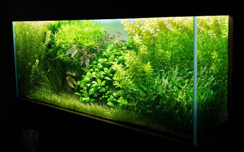 Aquarium 30.07.2021.jpg