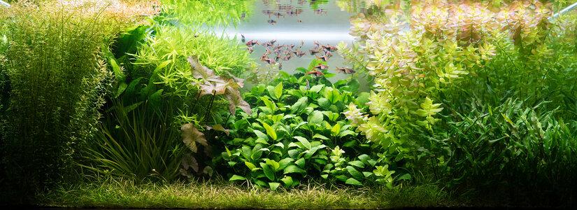 Aquarium 13.08.2021-1.jpg