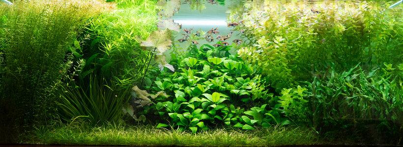 Aquarium 26.08.2021-1.jpg