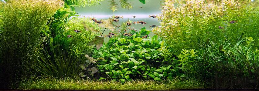 Aquarium 26.08.2021-2.jpg