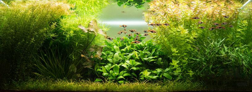 Aquarium 09.09.2021-2.jpg