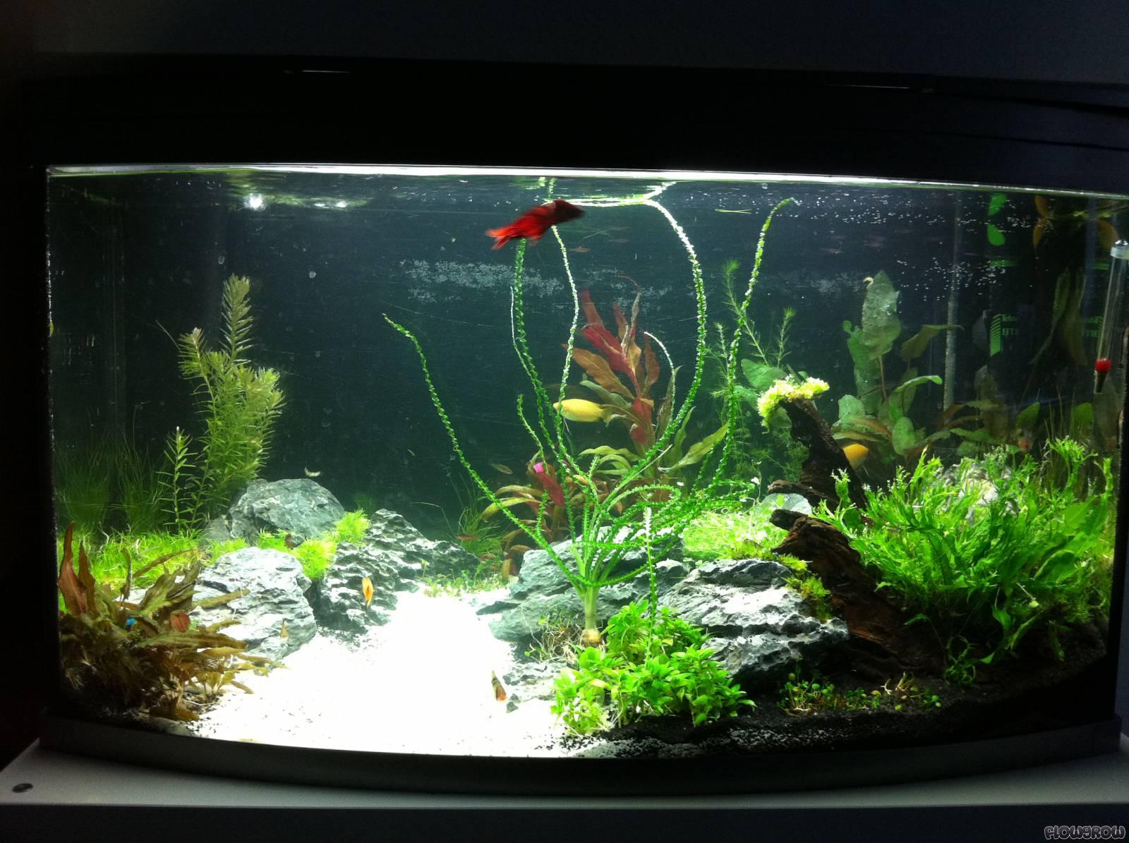 100 liter aquarium gebraucht aquarium 100 liter in 5500. Black Bedroom Furniture Sets. Home Design Ideas