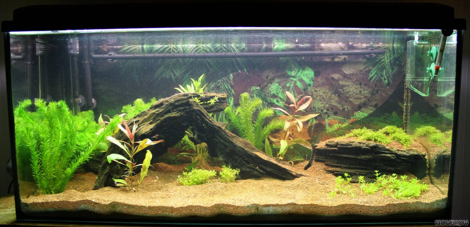 160l becken flowgrow aquascape aquarien datenbank. Black Bedroom Furniture Sets. Home Design Ideas