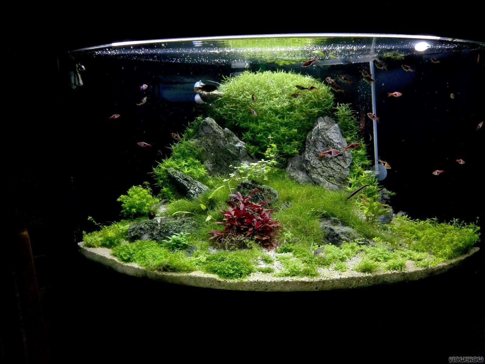180l eckaquarium flowgrow aquascape aquarien datenbank. Black Bedroom Furniture Sets. Home Design Ideas
