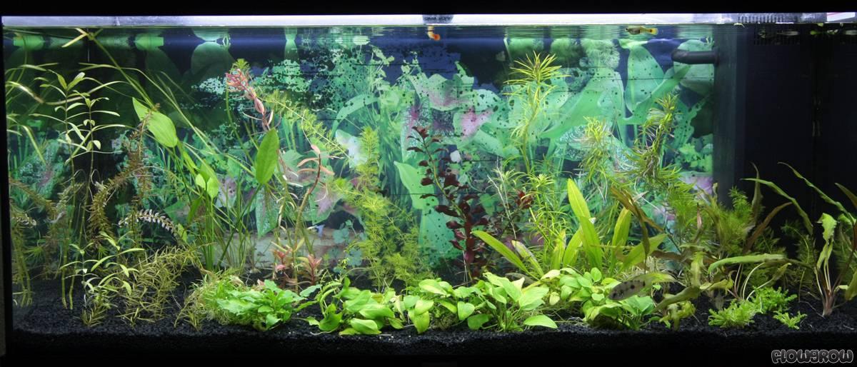180l wohnzimmer flowgrow aquascape aquarien datenbank. Black Bedroom Furniture Sets. Home Design Ideas