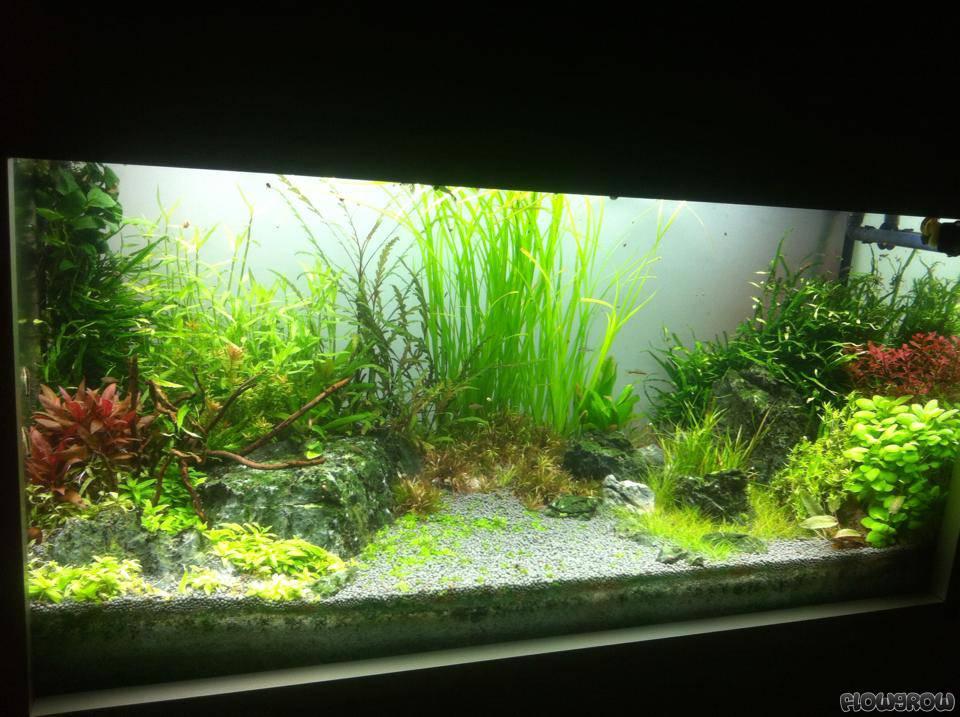 200 l in der wand flowgrow aquascape aquarien datenbank. Black Bedroom Furniture Sets. Home Design Ideas