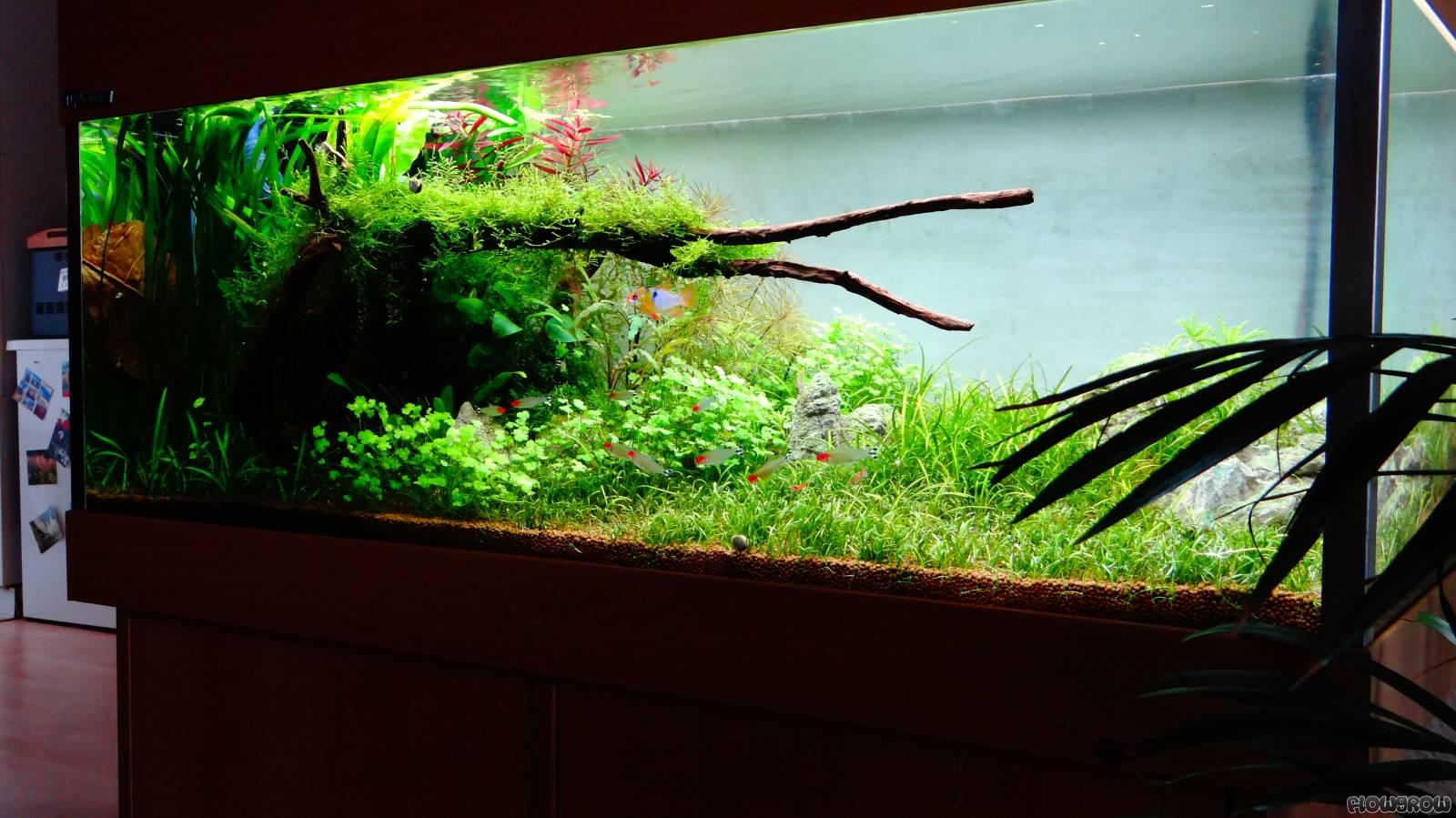 200l flowgrow aquascape aquarien datenbank. Black Bedroom Furniture Sets. Home Design Ideas