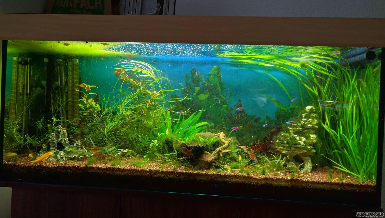 240l aquarium flowgrow aquascape aquarien datenbank. Black Bedroom Furniture Sets. Home Design Ideas