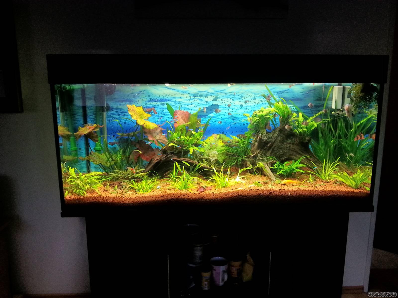 300l aquarium flowgrow aquascape aquarien datenbank. Black Bedroom Furniture Sets. Home Design Ideas