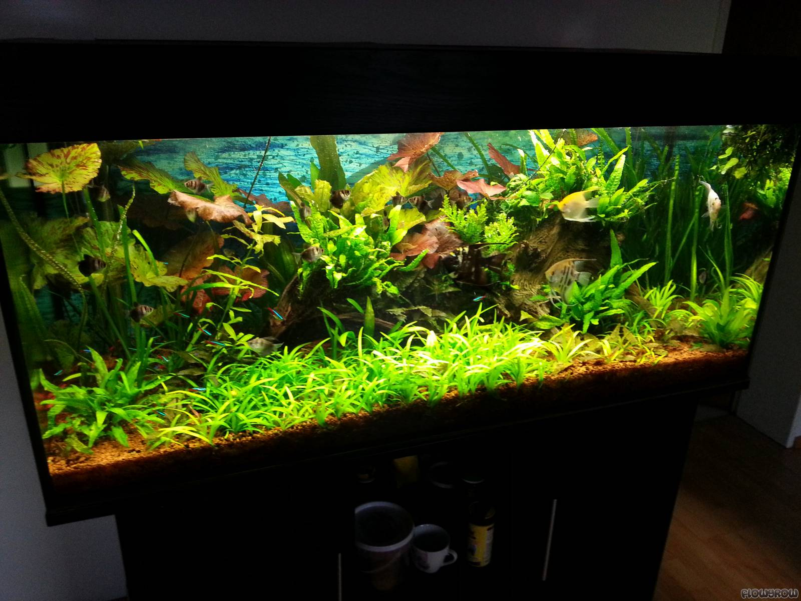 300l aquarium flowgrow aquascape aquarien datenbank. Black Bedroom Furniture Sets. Home Design Ideas