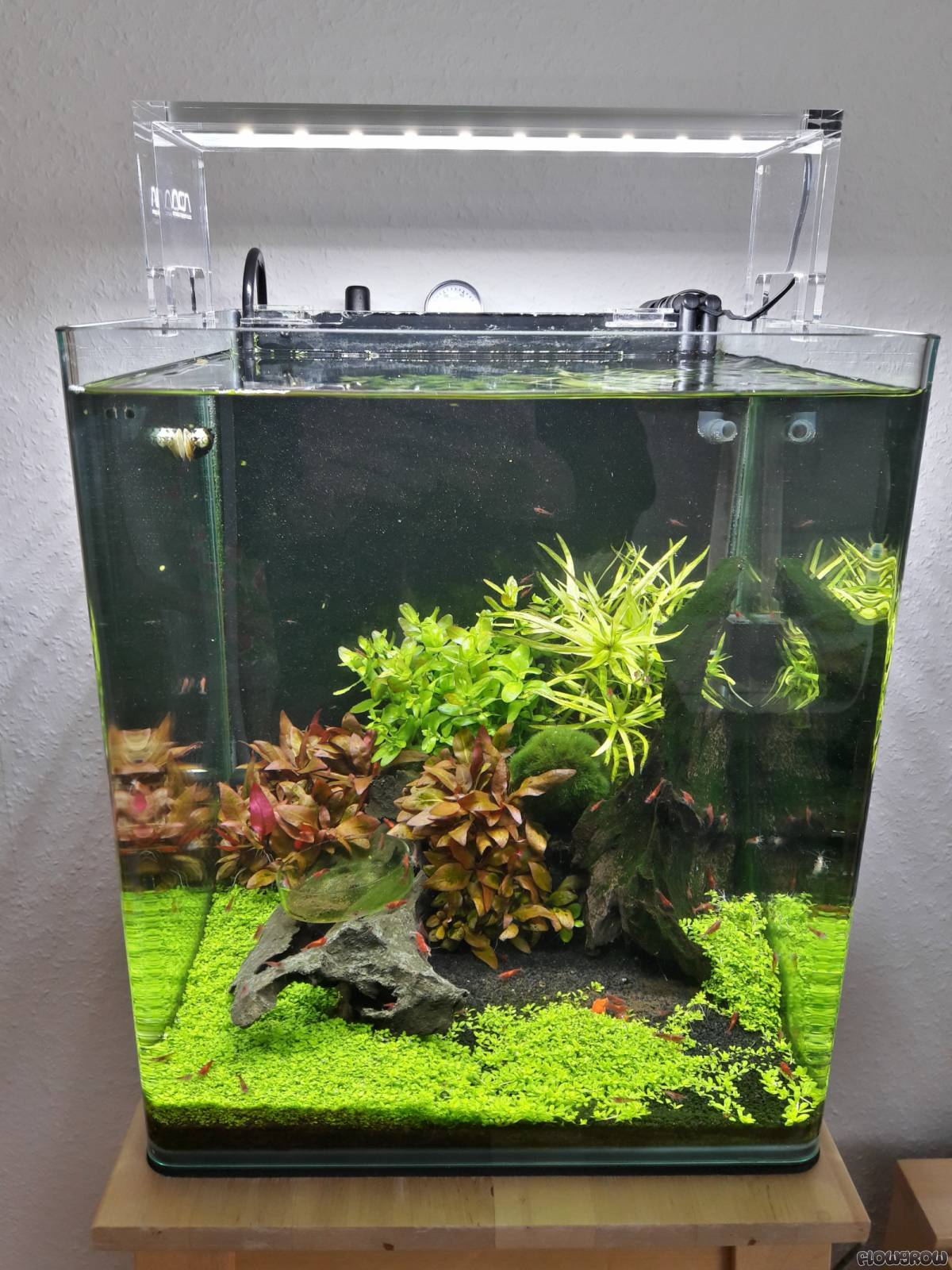 30l nano cube flowgrow aquascape aquarien datenbank. Black Bedroom Furniture Sets. Home Design Ideas