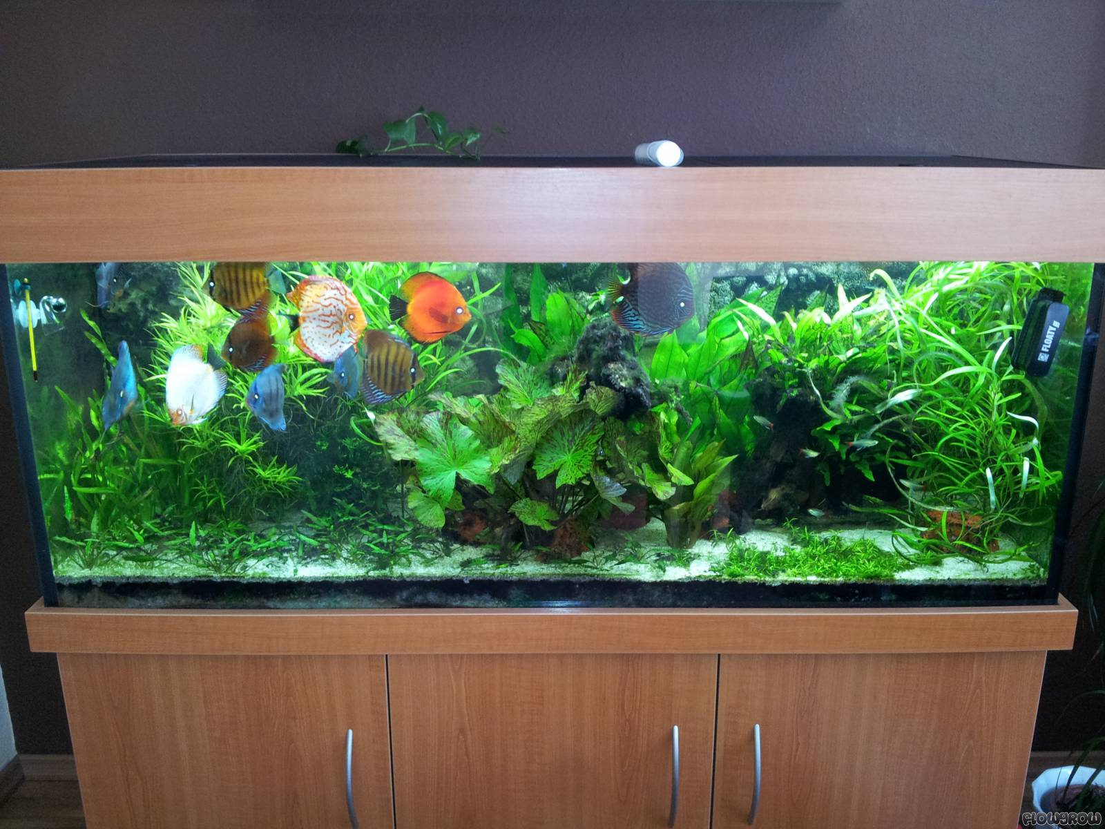 540l diskus flowgrow aquascape aquarien datenbank. Black Bedroom Furniture Sets. Home Design Ideas