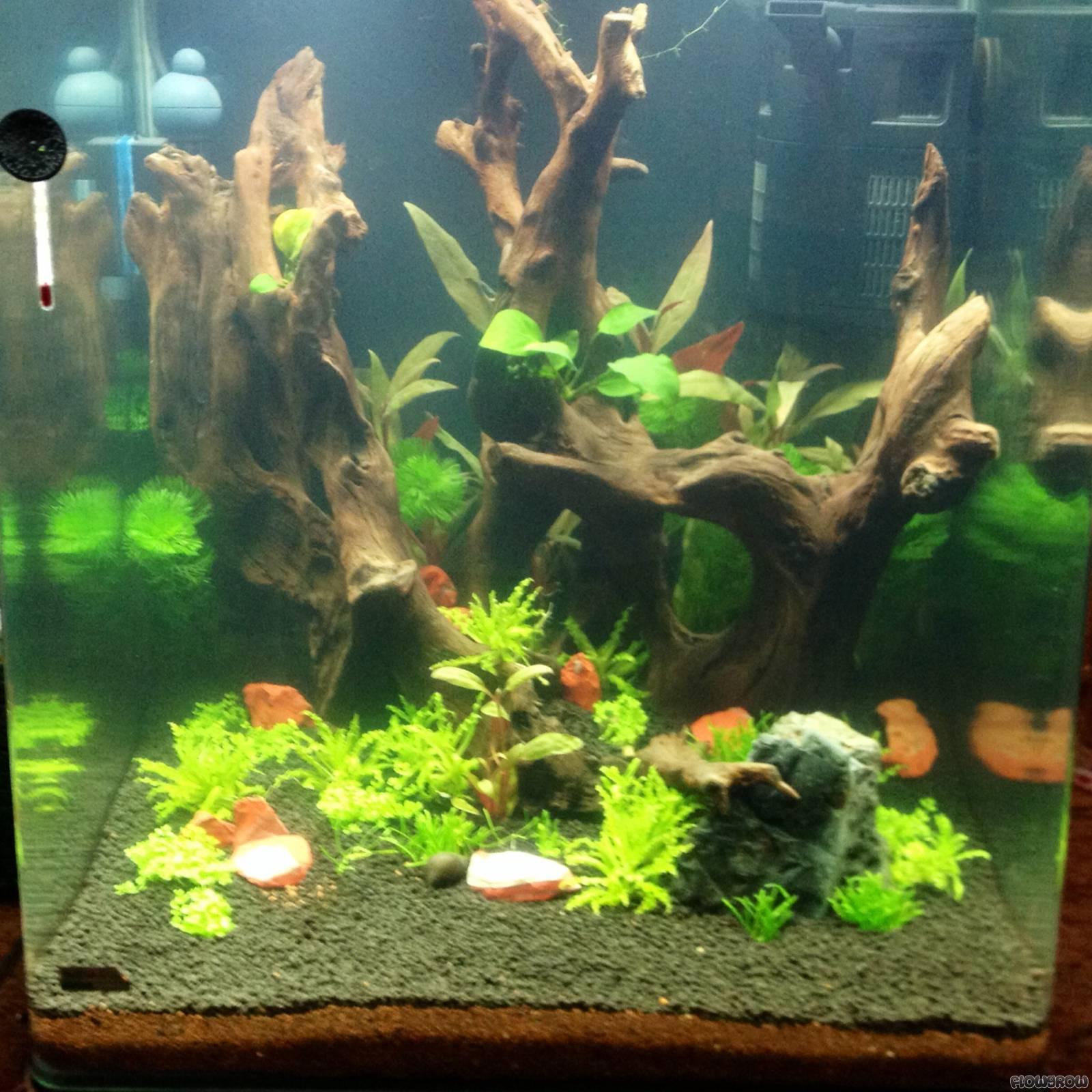 60l nano flowgrow aquascape aquarien datenbank. Black Bedroom Furniture Sets. Home Design Ideas