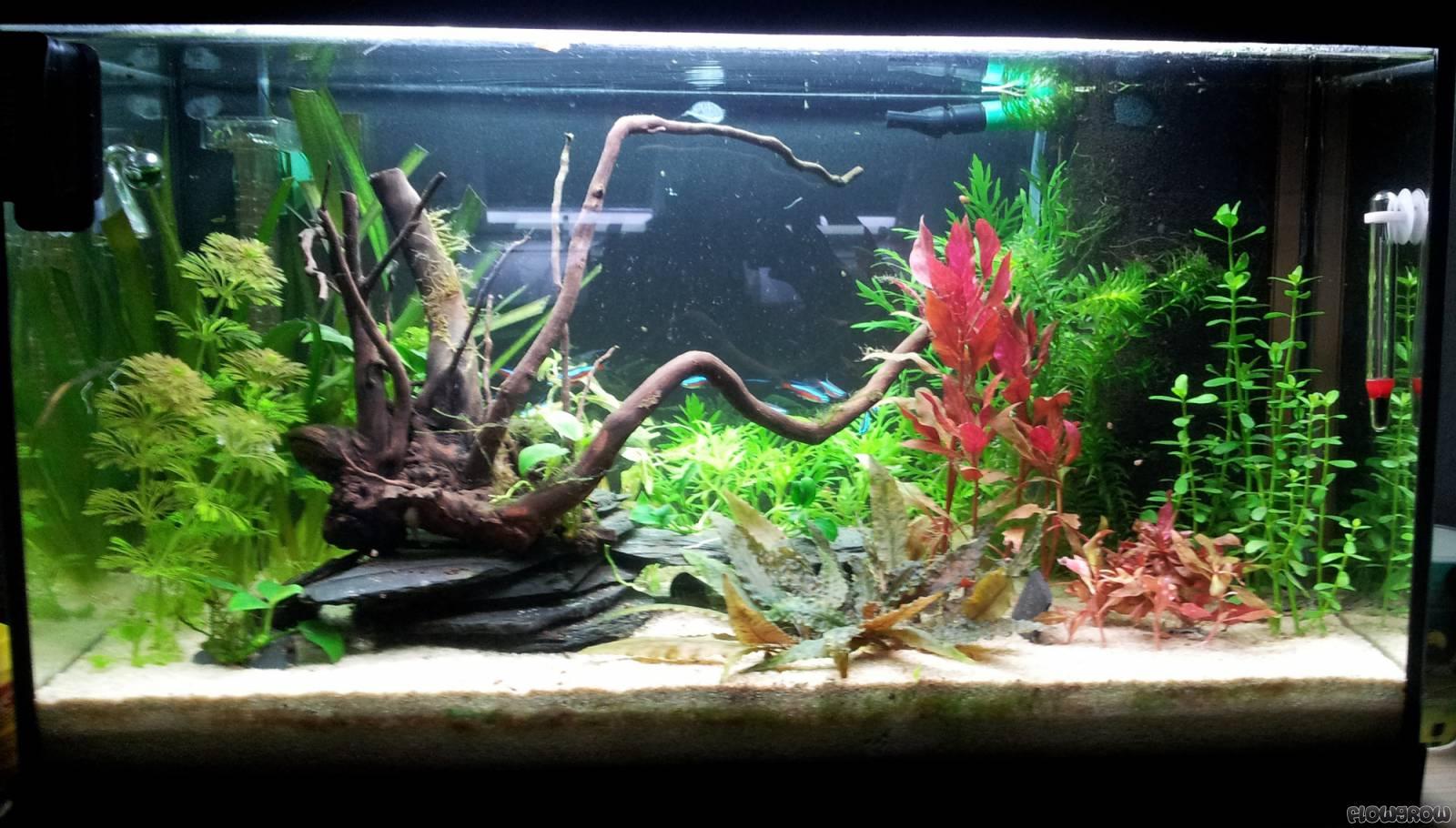 63l kinderzimmer flowgrow aquascape aquarien datenbank On aquarium im kinderzimmer