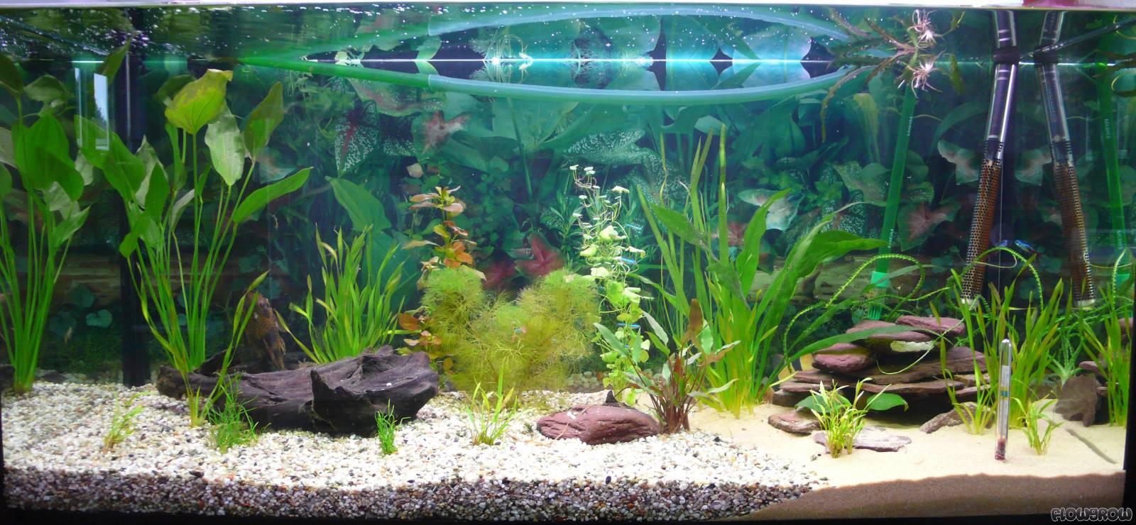 aquarium 1 200l flowgrow aquascape aquarien datenbank. Black Bedroom Furniture Sets. Home Design Ideas