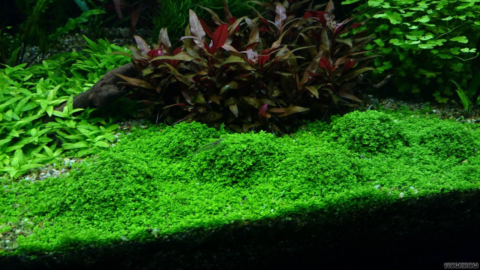 Bacia Do Rio Amazonas Flowgrow Aquascape Aquarien Datenbank