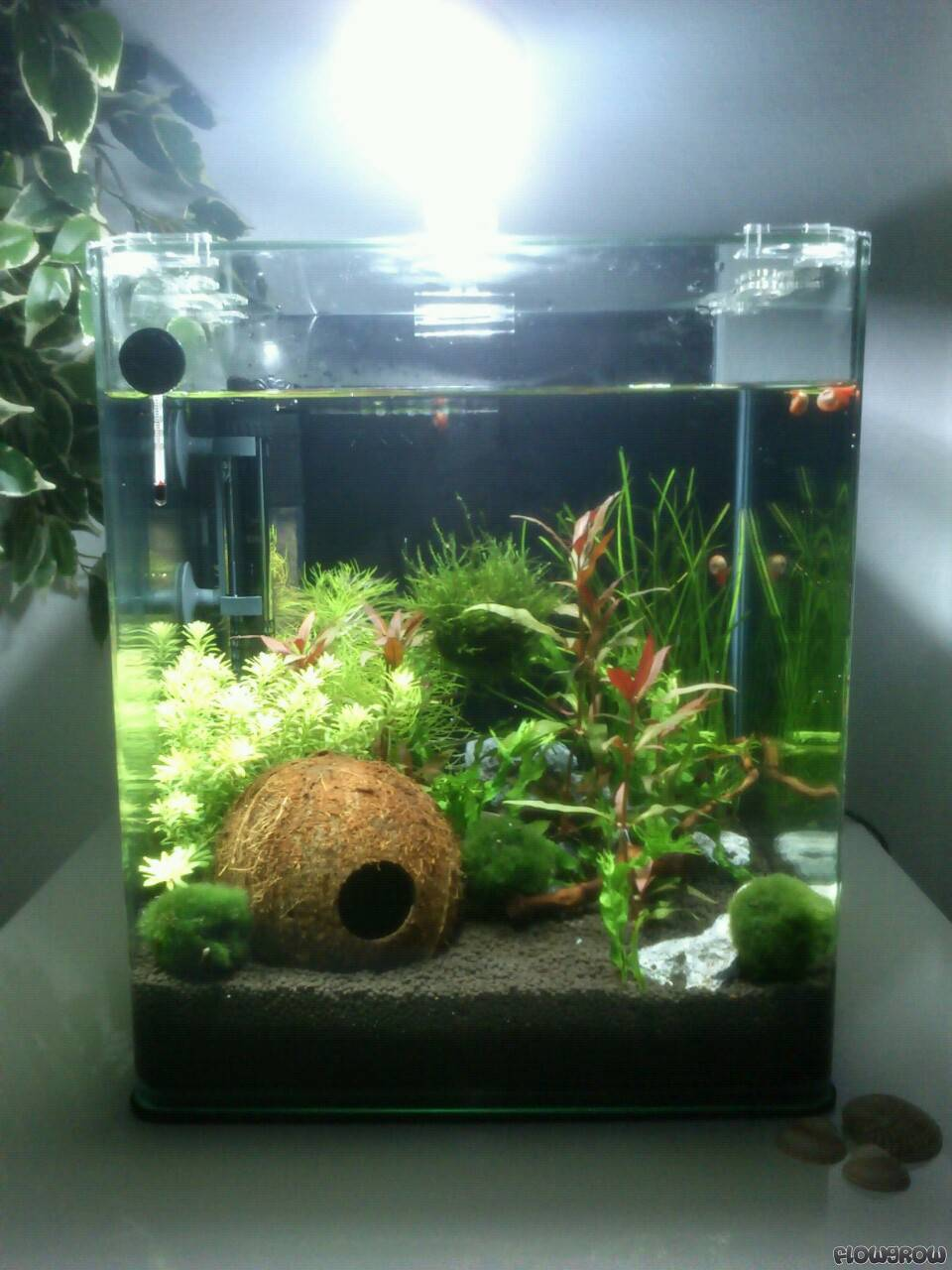 coconut hideout 30 liter cube flowgrow aquascape aquarien datenbank. Black Bedroom Furniture Sets. Home Design Ideas