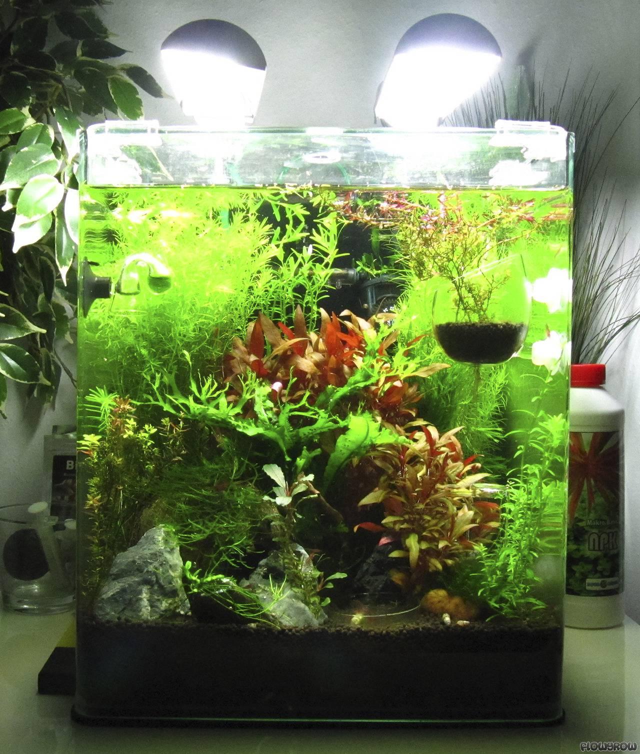 Coconut Hideout 30 Liter Cube Flowgrow Aquascape Aquarien Datenbank