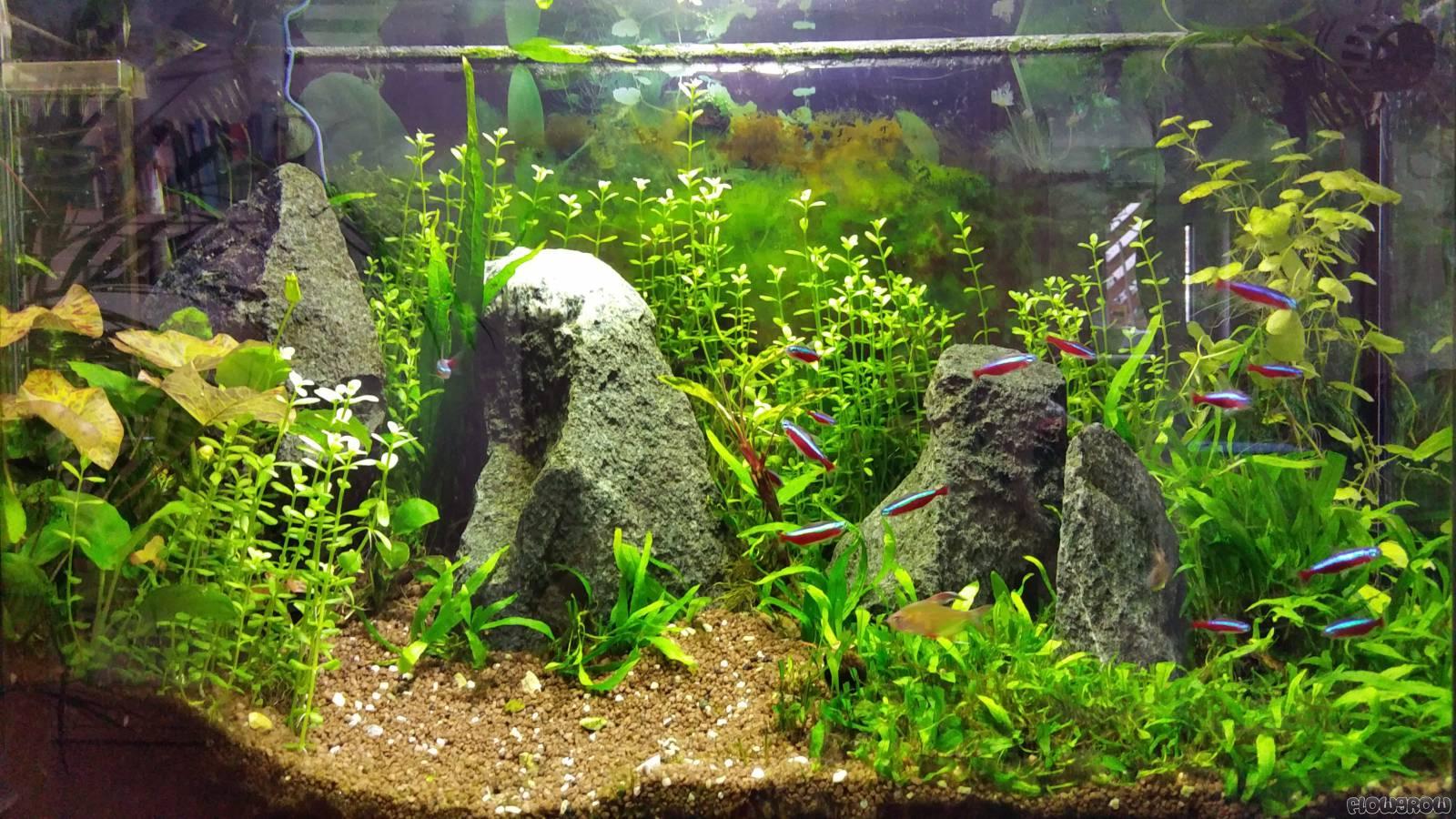 das erste eigene becken flowgrow aquascape aquarien datenbank. Black Bedroom Furniture Sets. Home Design Ideas