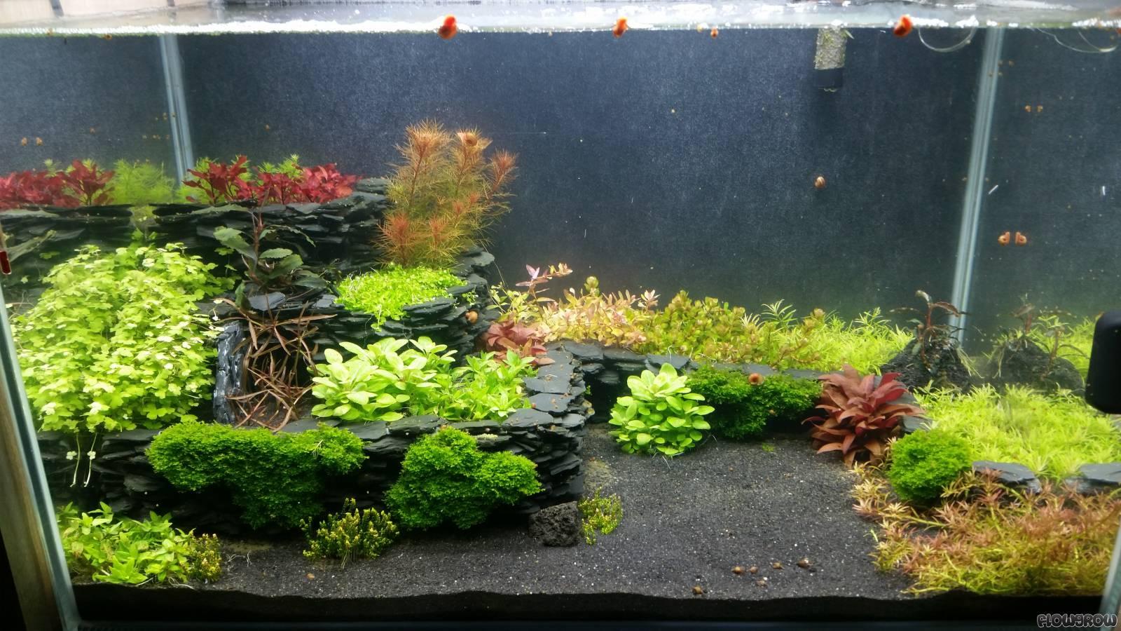 dennis 39 schiefer steps flowgrow aquascape aquarien datenbank. Black Bedroom Furniture Sets. Home Design Ideas