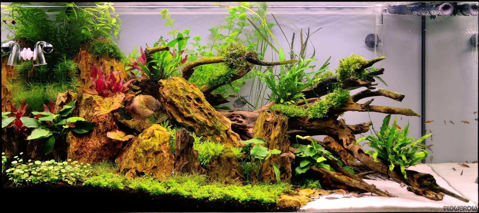 dragon triangle flowgrow aquascape aquarien datenbank. Black Bedroom Furniture Sets. Home Design Ideas