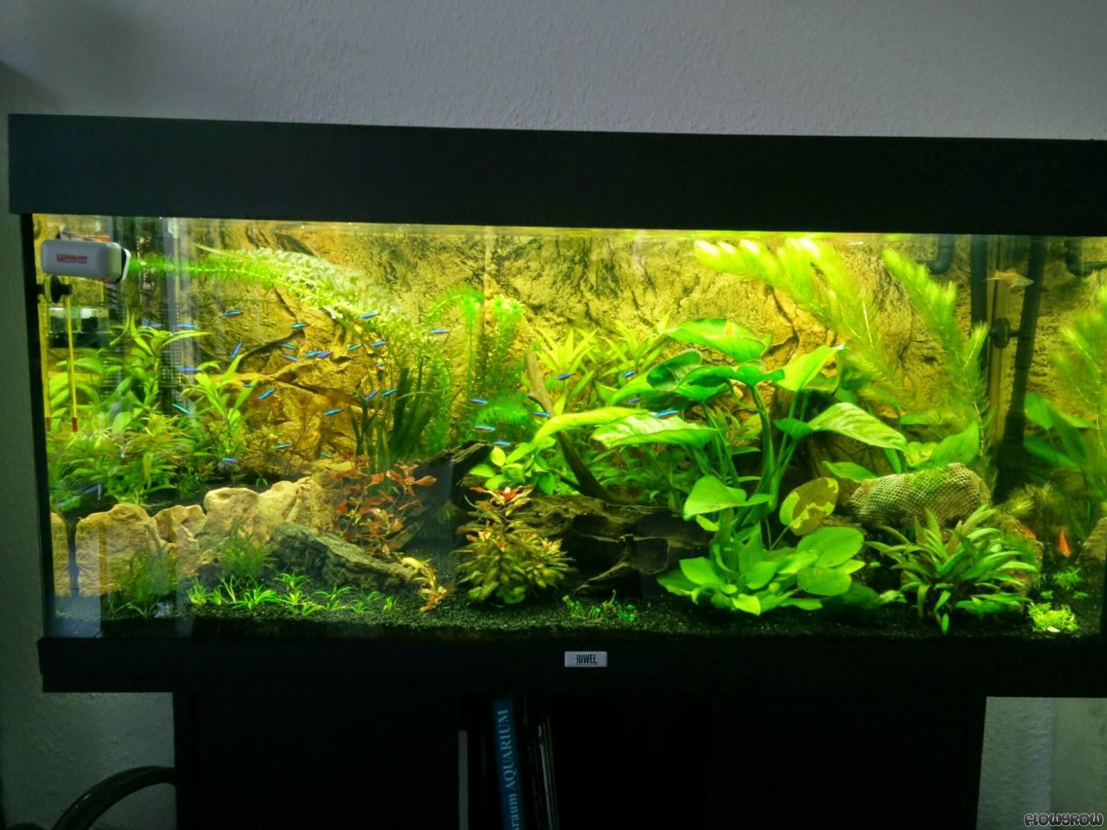 einsteiger 180 l flowgrow aquascape aquarien datenbank. Black Bedroom Furniture Sets. Home Design Ideas