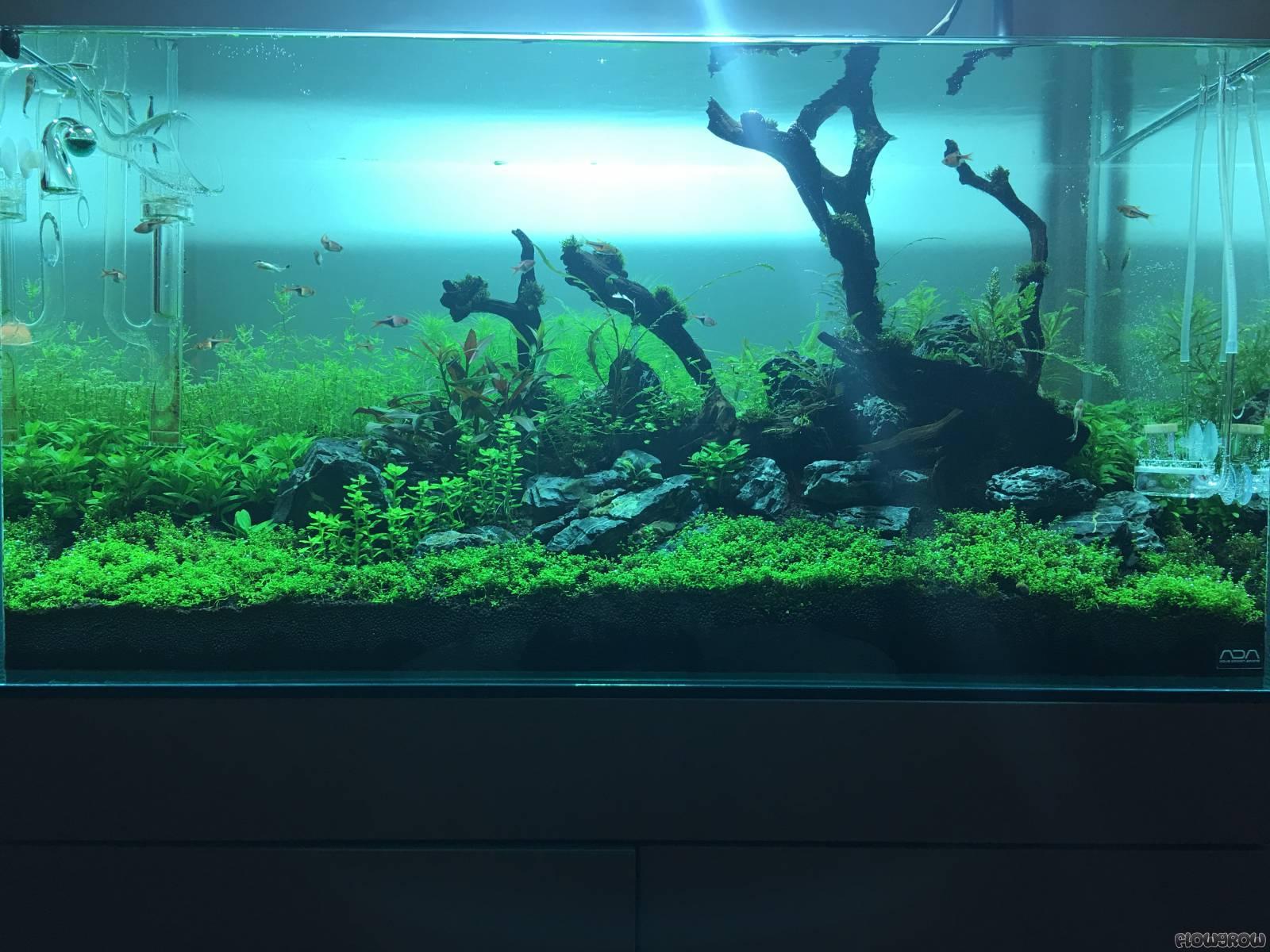 ADA NA Lamp NAG 150W Green | Aquasabi Aquaristik Shop