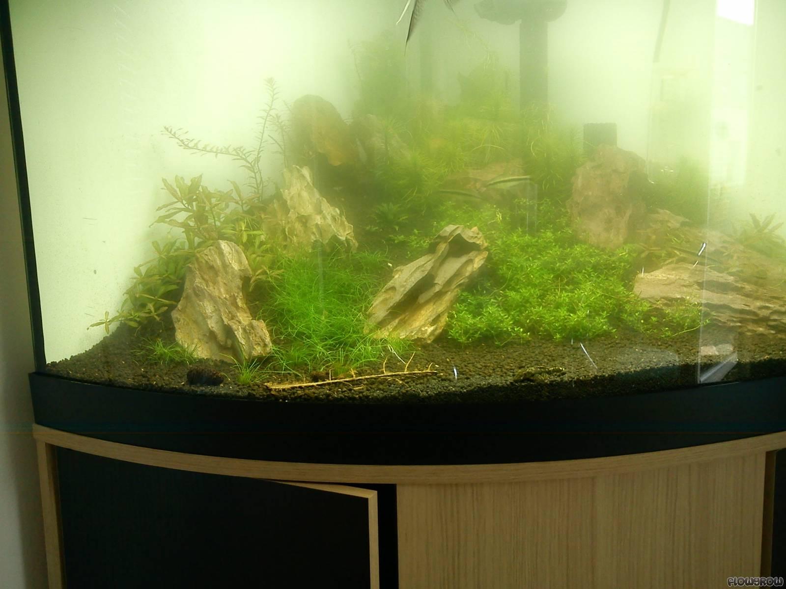 fluval venezia 190 flowgrow aquascape aquarien datenbank. Black Bedroom Furniture Sets. Home Design Ideas