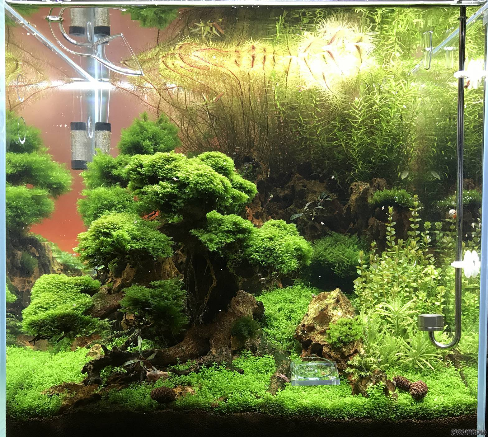 garnelen oase flowgrow aquascape aquarien datenbank. Black Bedroom Furniture Sets. Home Design Ideas