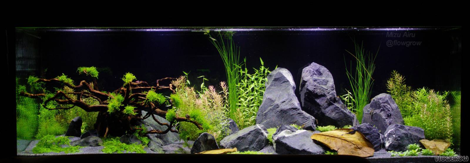 hard rock heaven flowgrow aquascape aquarien datenbank. Black Bedroom Furniture Sets. Home Design Ideas