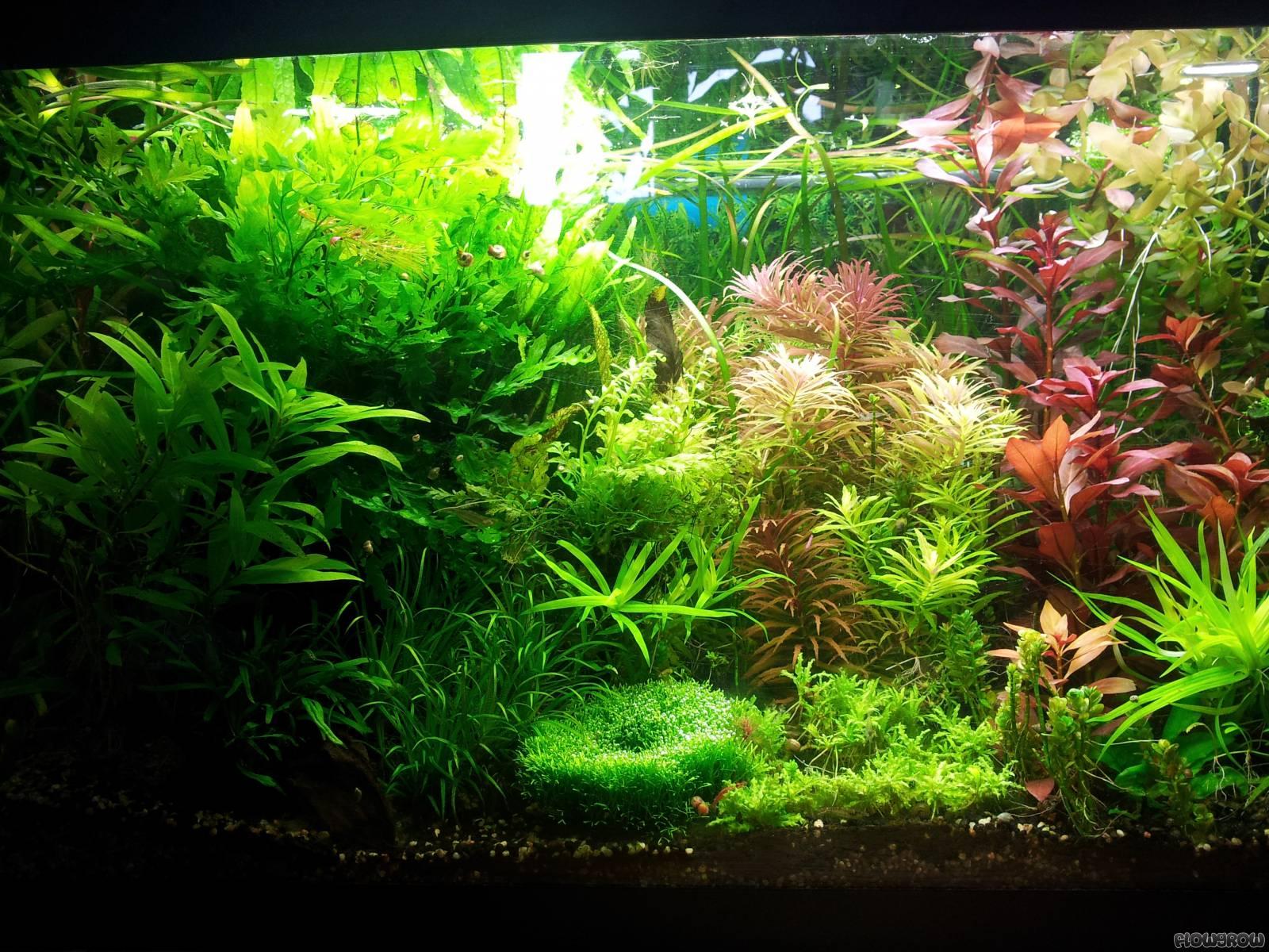 flowgrow aquascape aquarien datenbank. Black Bedroom Furniture Sets. Home Design Ideas