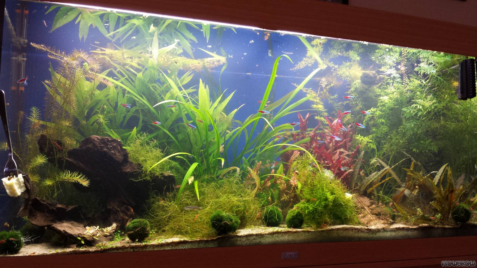 juwel 360 liter flowgrow aquascape aquarien datenbank. Black Bedroom Furniture Sets. Home Design Ideas