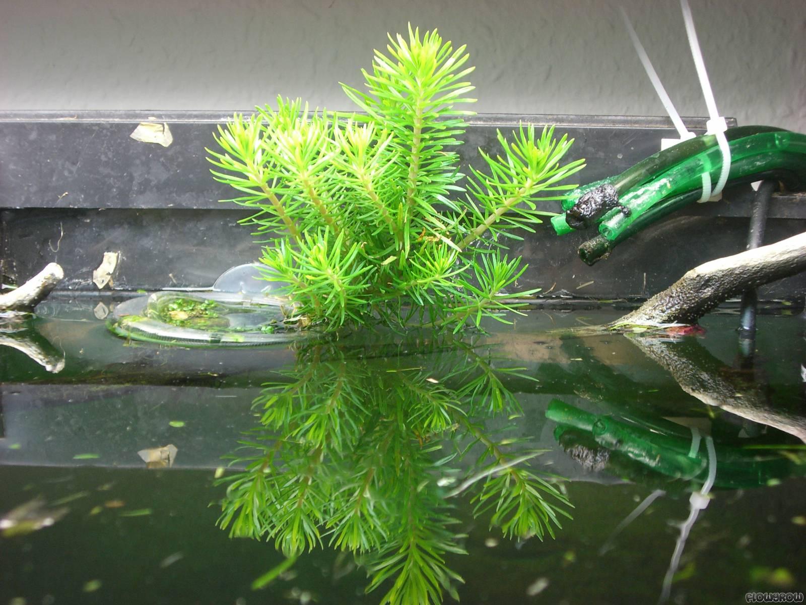 juwel rio 300 flowgrow aquascape aquarien datenbank. Black Bedroom Furniture Sets. Home Design Ideas