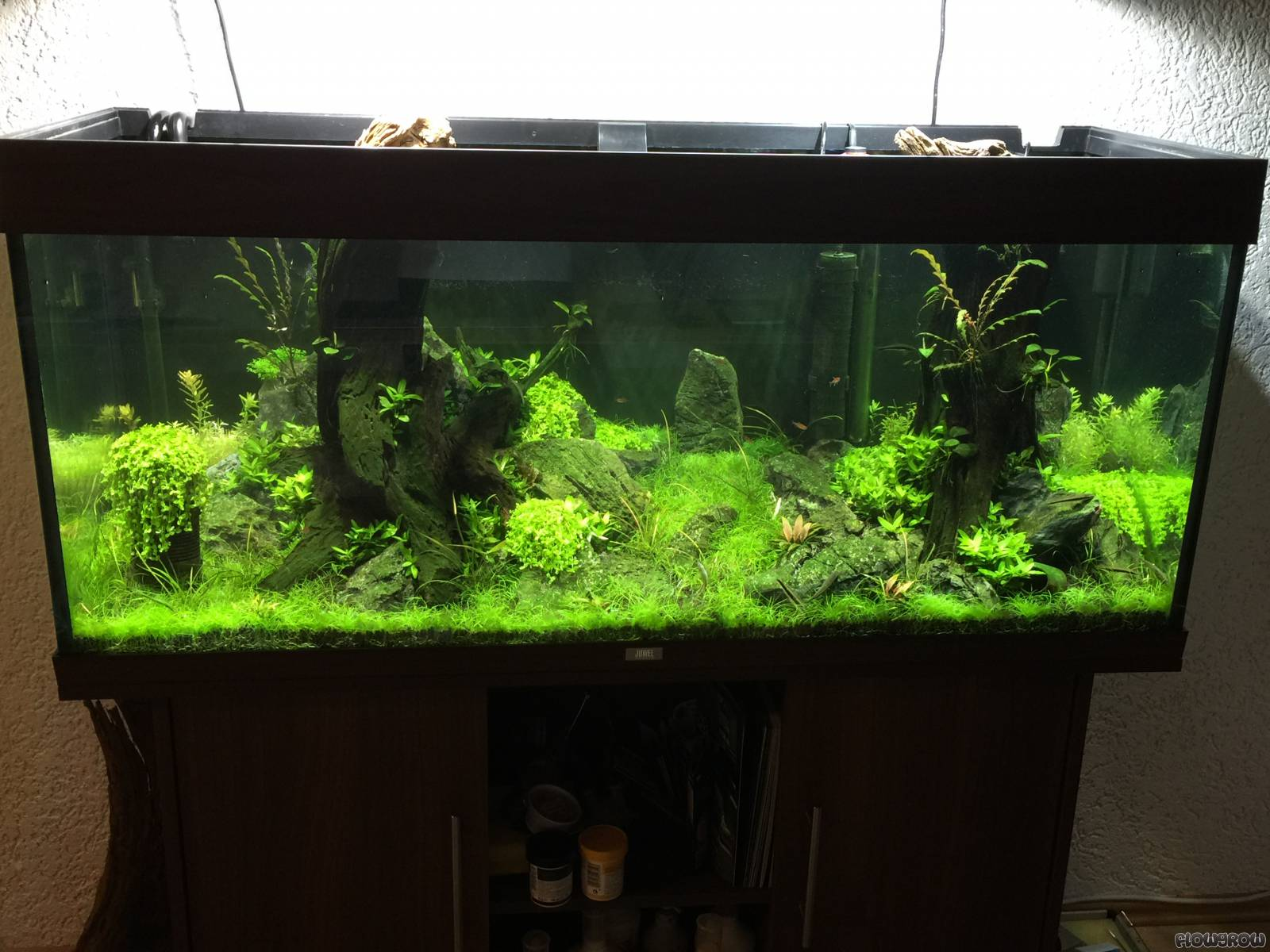 juwel rio240 flowgrow aquascape aquarien datenbank. Black Bedroom Furniture Sets. Home Design Ideas