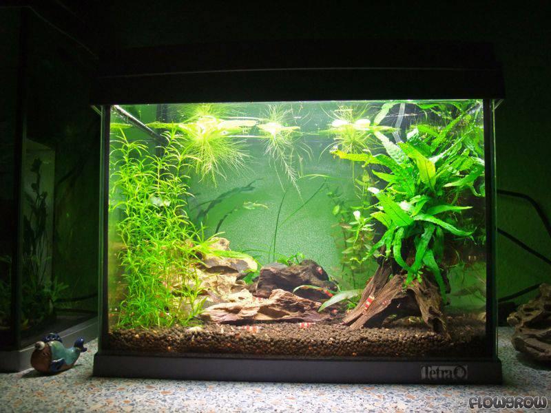 kleines aquarium kaq flowgrow aquascapeaquarien datenbank