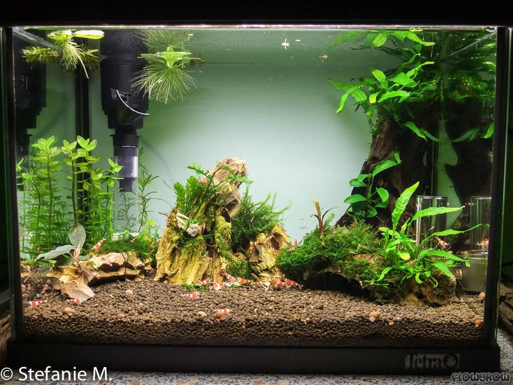 kleines aquarium kaq flowgrow aquascape aquarien datenbank. Black Bedroom Furniture Sets. Home Design Ideas